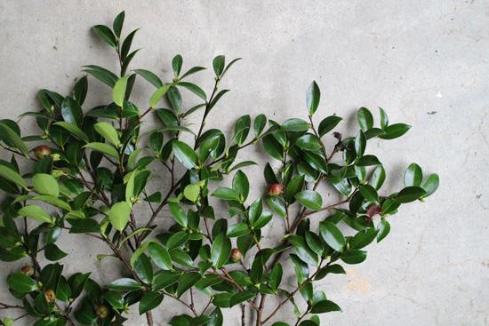 植物染色「京都の秋を染める」
